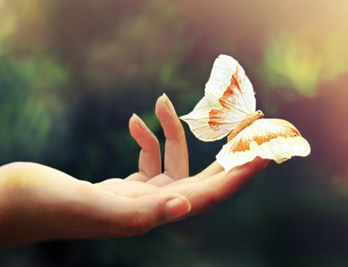 Ho un fiore in mano forse – Kiki Dimoulà