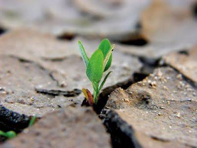 coraggio e resilienza - Storia breve sulla difficoltà e necessità dei cambiamenti