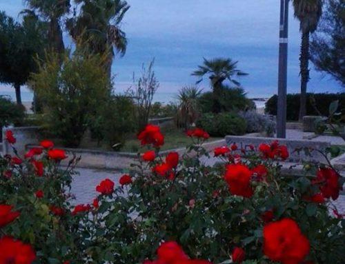 Continuano a fiorire rose