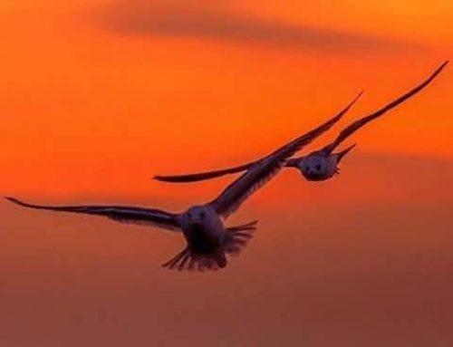 Ho sempre desiderato vedere un tramonto