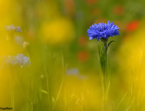 Gratitudine – Un'azzurra vastità