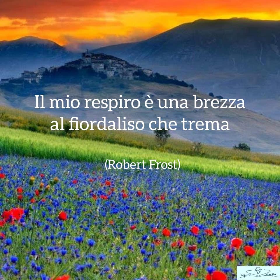 Fiori di campo - Fiordaliso - Robert Frost
