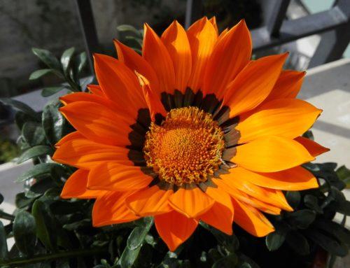 La felicità trova posto anche in un fiore