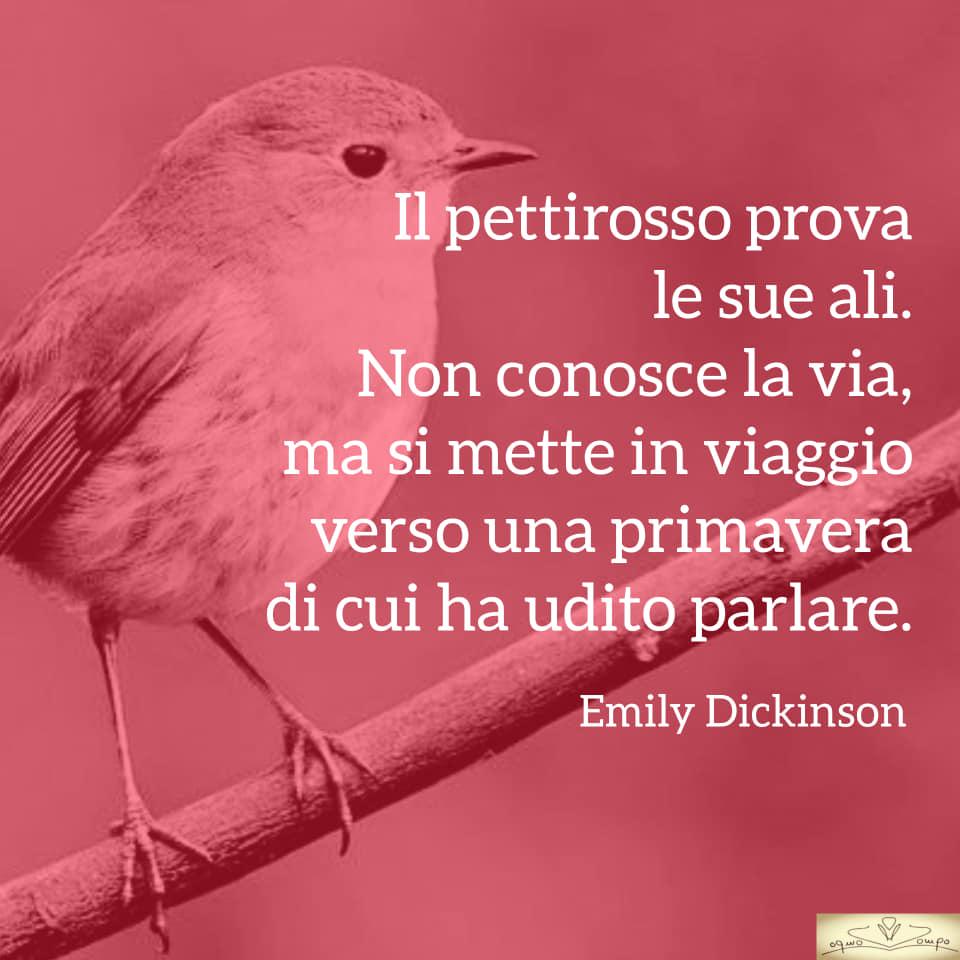 Poesie sulla gioia e la felicità - Poesie di Emily Dickinson - Il pettirosso prova le ali